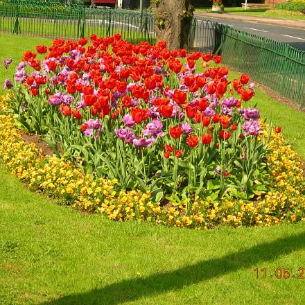 Tulips., Nikon E7600