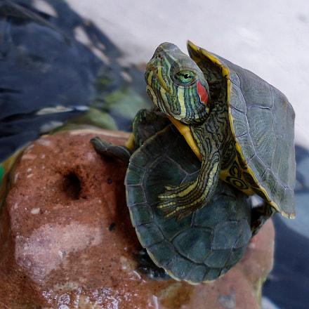Turtles, Sony DSC-W610