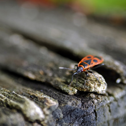 Insect, Pentax K-30