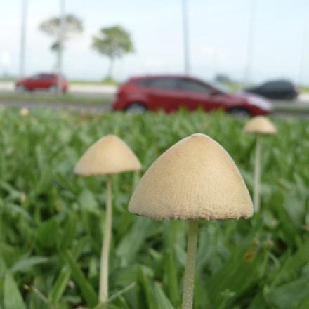 Cogumelos na praça, Panasonic DMC-ZS7