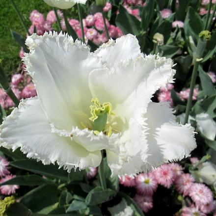 jardin des plantes (), Canon POWERSHOT A1400
