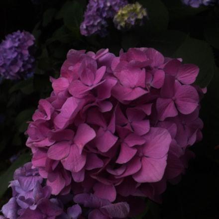 pink, Fujifilm FinePix S4850