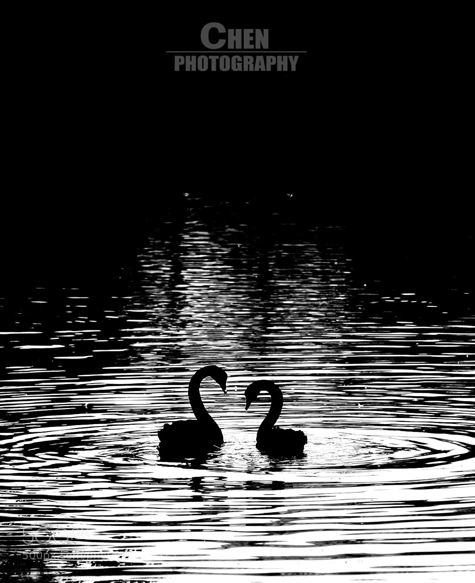 Photograph a couple by Evan Chen on 500px