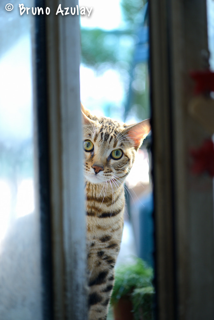 Photograph Can I Come in ? by Bruno AzuLay on 500px