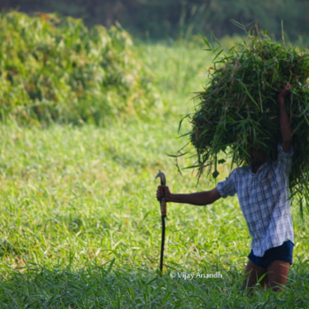 Agriculturist, Canon EOS 1100D, Canon EF-S 55-250mm f/4-5.6 IS II