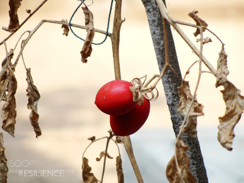 Photograph Resilience by Sagar Satpute on 500px