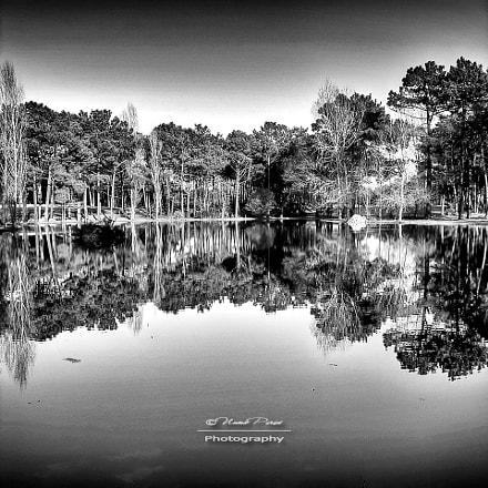 Water Reflections, Sony DSC-P100
