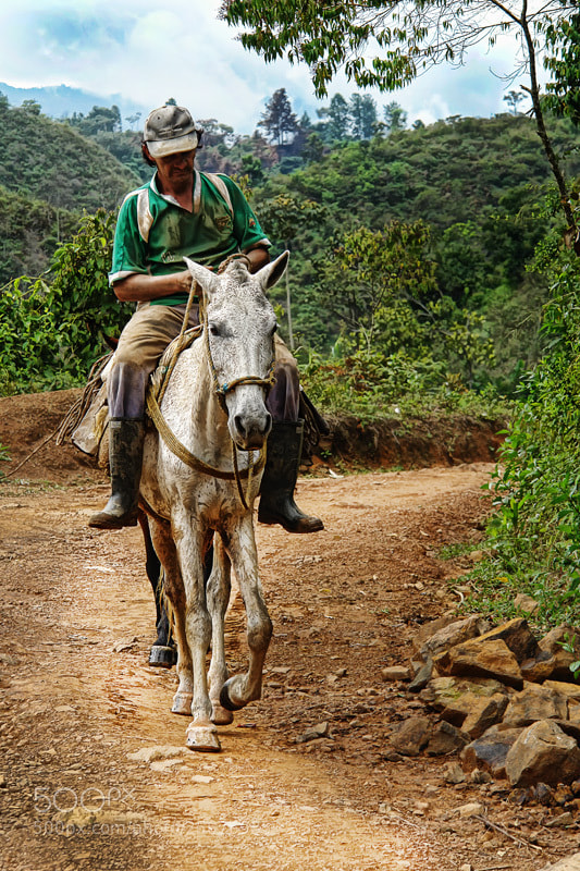 Photograph Campesino y su caballo - Colombian cowboy by Alex Bedoya on 500px