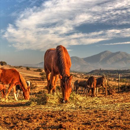 Horses, Canon EOS REBEL T3, Canon EF 28-105mm f/4-5.6