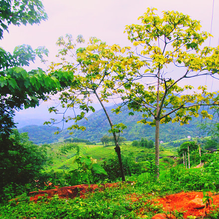 Summer tree, Canon POWERSHOT SX220 HS