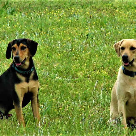 Two dogs, Canon POWERSHOT S2 IS