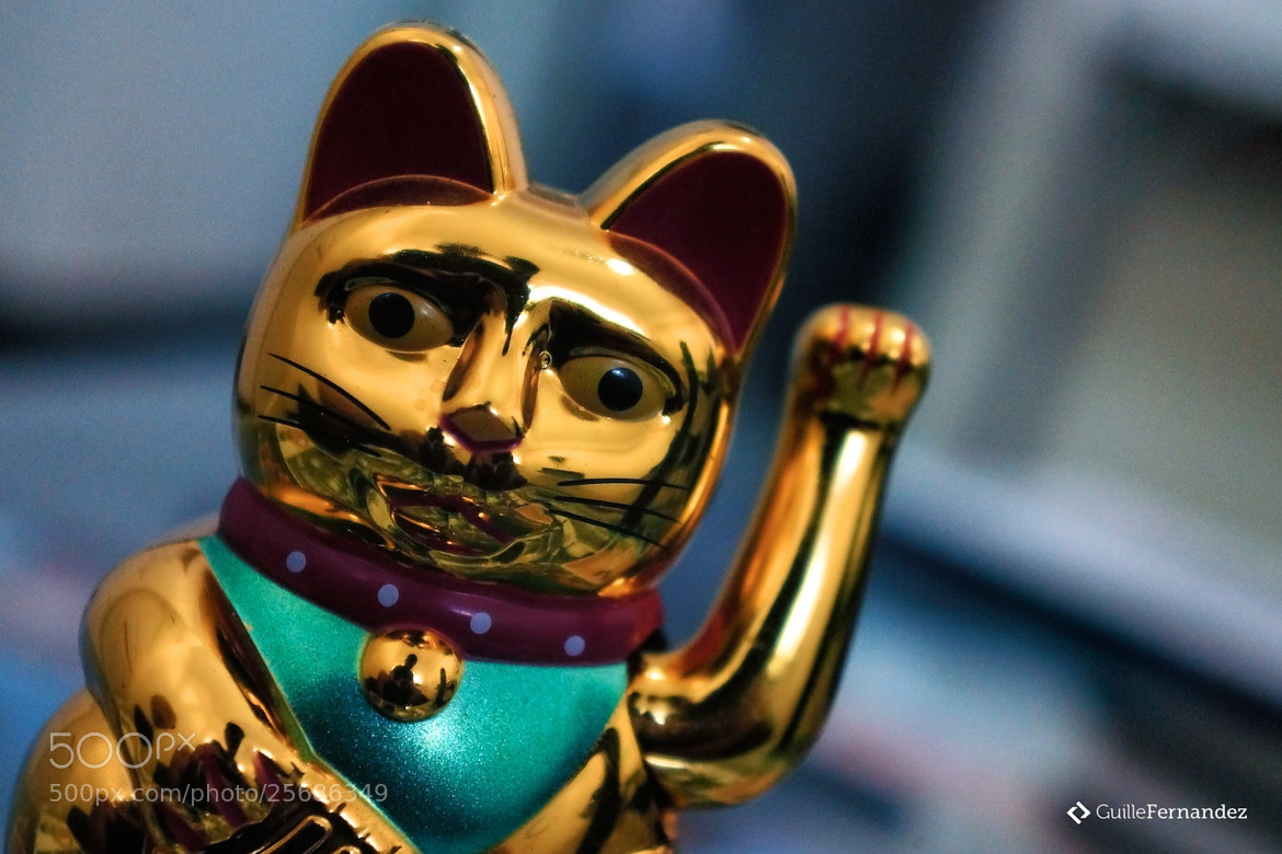 Photograph Maneki-Neko by Guillermo Fernandez Brombley on 500px