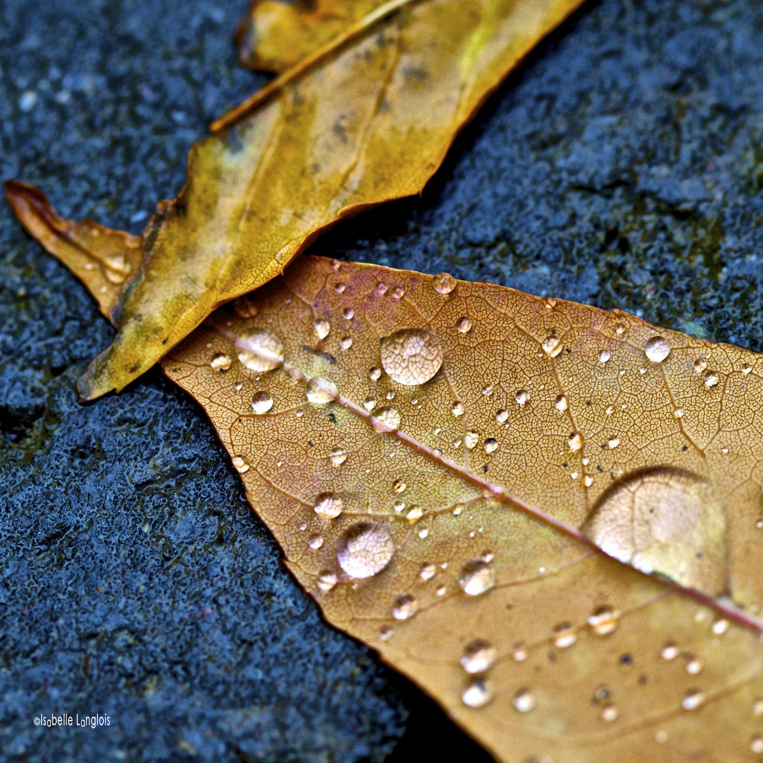 Photograph After the rain by Isabelle Langlois on 500px