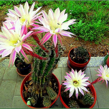 Stupendi fiori di piante, Fujifilm FinePix JX250