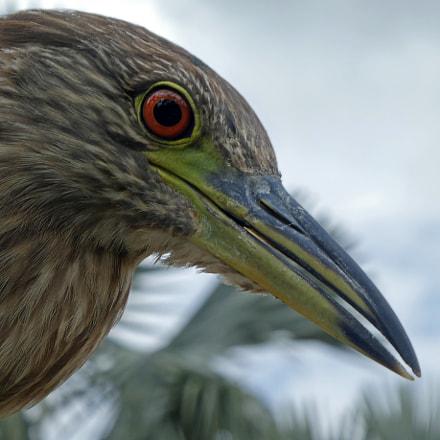 Portrait of a Bird, Panasonic DMC-ZS60