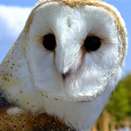 Owl Stare, Fujifilm FinePix S9000