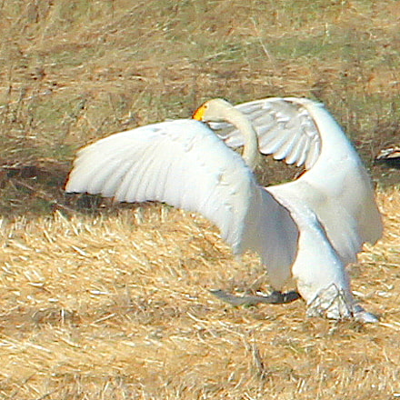 The flat foot landing..., Canon EOS 700D, Canon EF 70-300mm f/4.5-5.6 DO IS USM