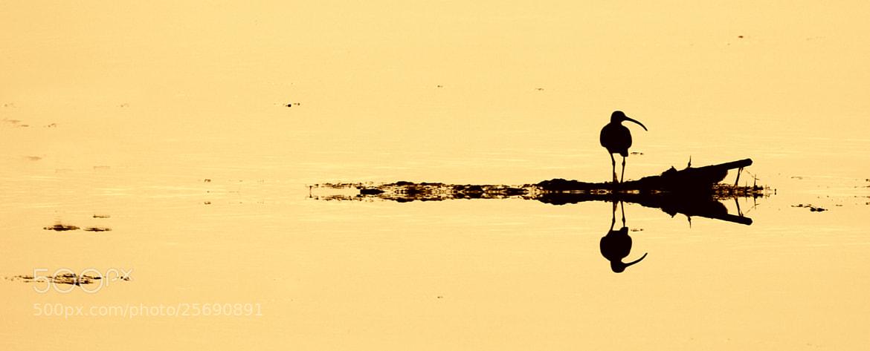 Photograph el delta es desvetlla by Marc Serarols on 500px