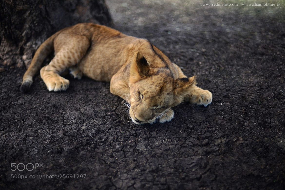 Photograph Shumba by Fred Melot on 500px