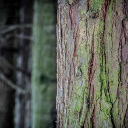Tree Line, Panasonic DMC-FZ330