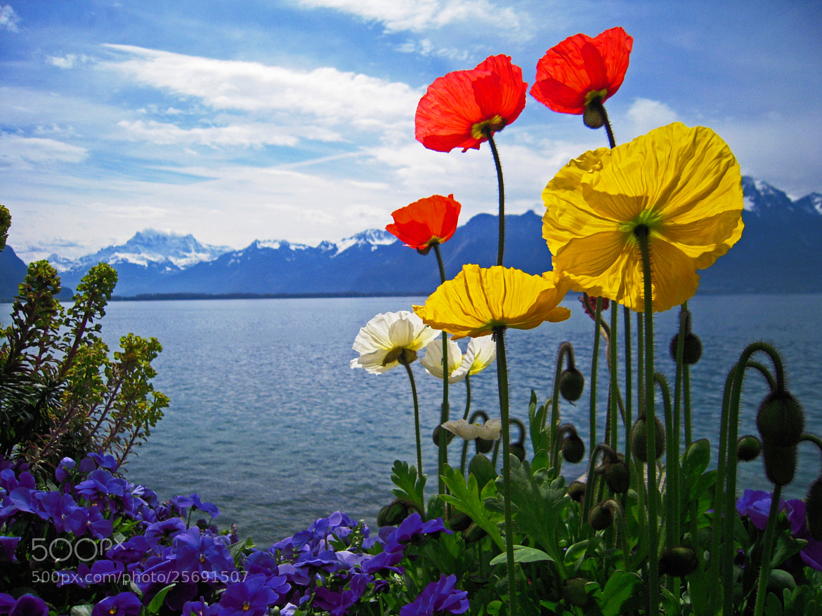 Photograph Printemps à Montreux 2 by Hakki Arican on 500px