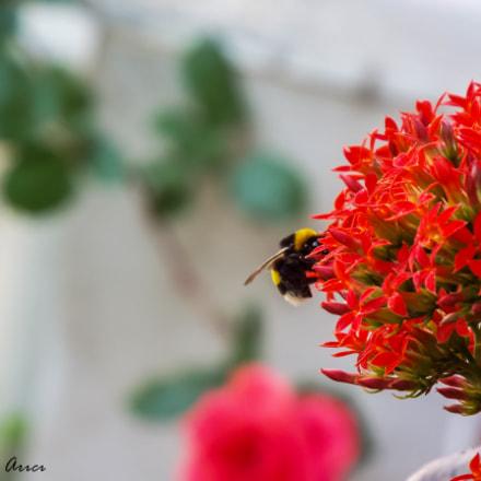Bee - Arı, Fujifilm FinePix S8200