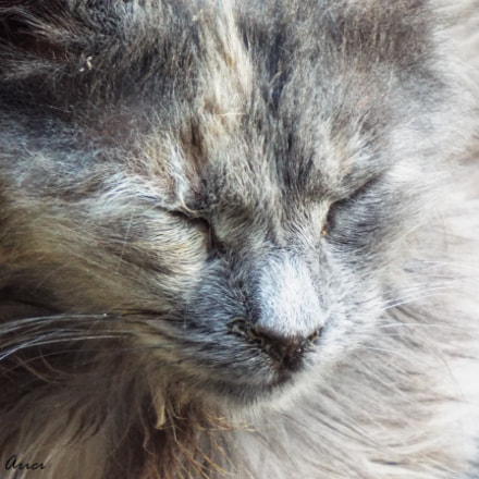 Cat, Fujifilm FinePix S8200