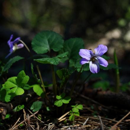 Forest violet, Samsung NX3000