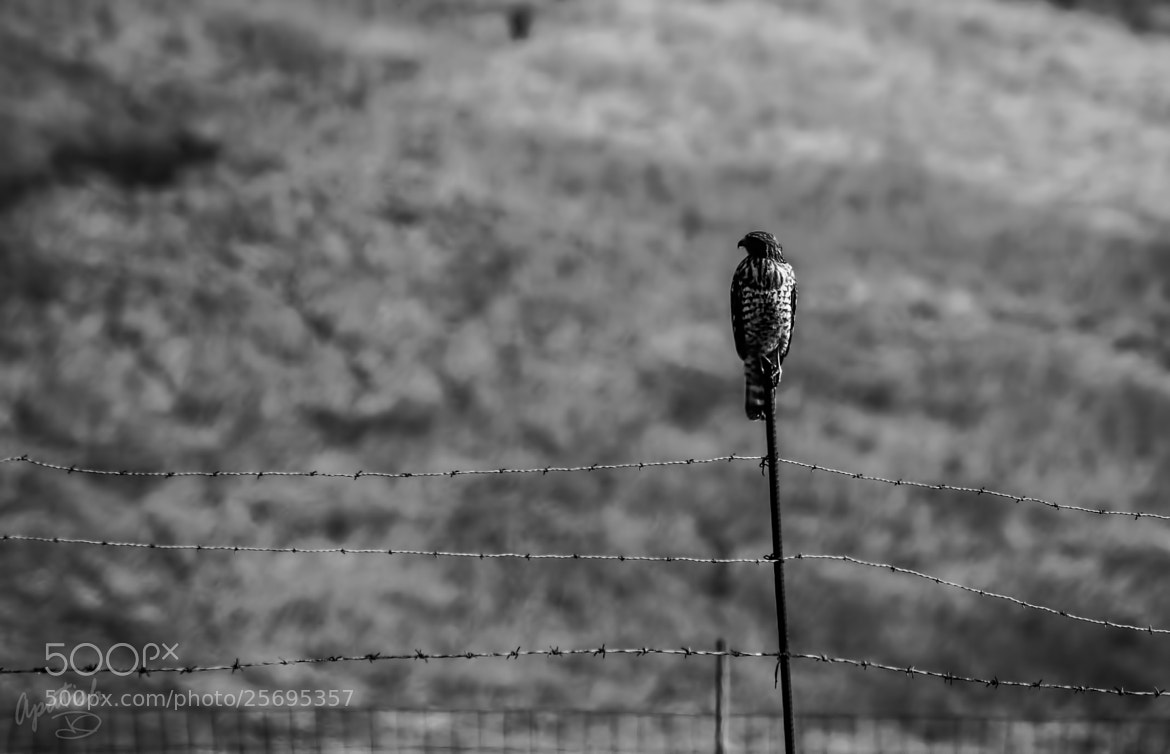Photograph the lonely one by Ariel Patish on 500px