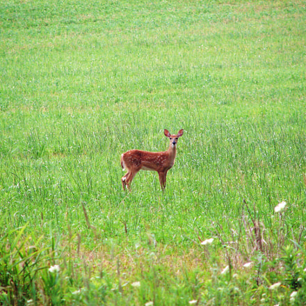 Young Deer, Sony DSC-H1