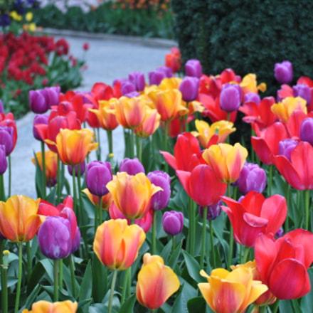 Flowers, Nikon D3000, AF-S DX VR Zoom-Nikkor 55-200mm f/4-5.6G IF-ED