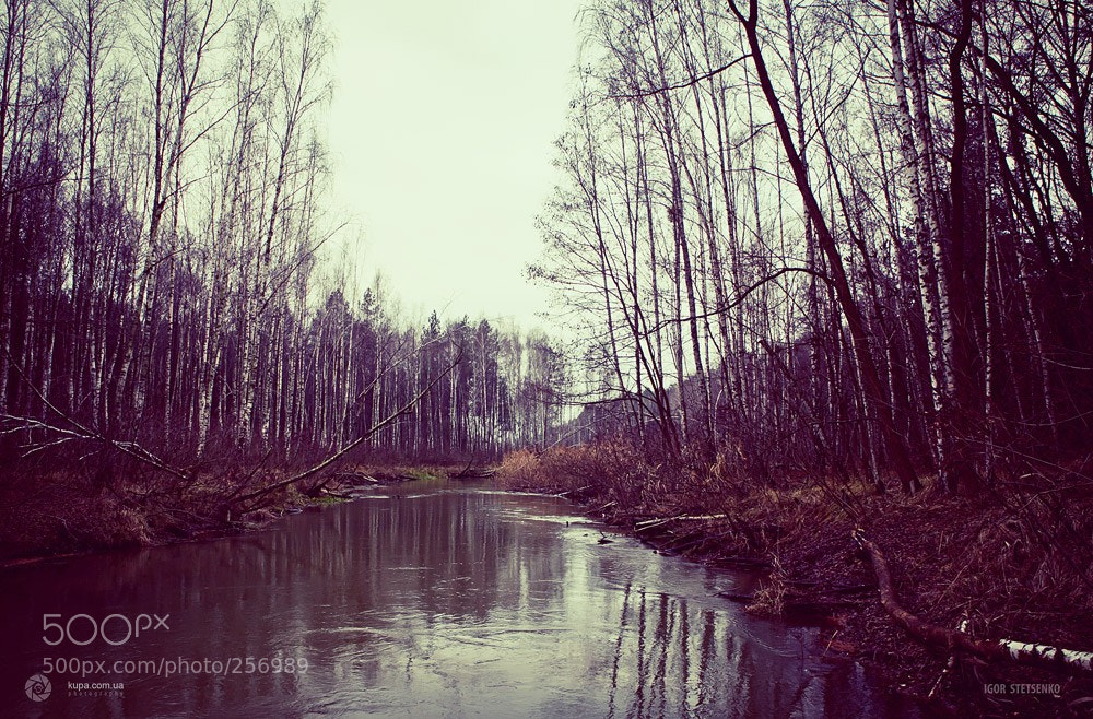 Photograph Birch river by Игорь Стеценко on 500px