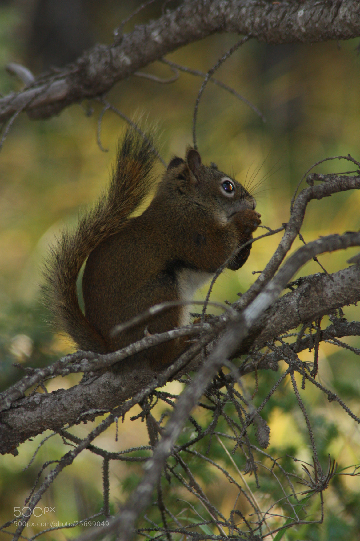 Photograph Where's ma nuts !! by Michael Moore on 500px