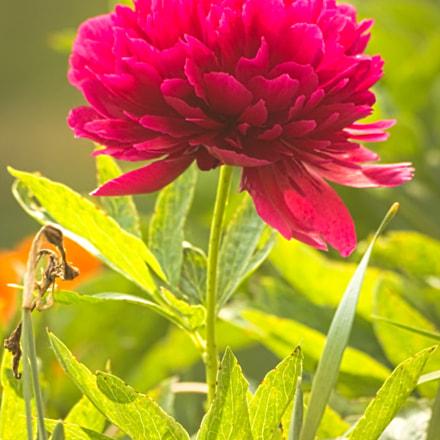 Spring colors, Canon EOS 1100D, Sigma 70-300mm f/4-5.6 [APO] DG Macro