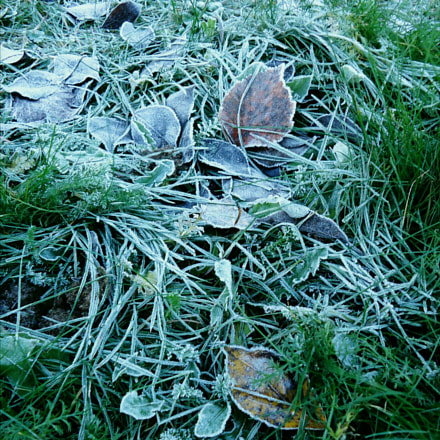 Hoarfrost on the grass, Sony DSC-W610