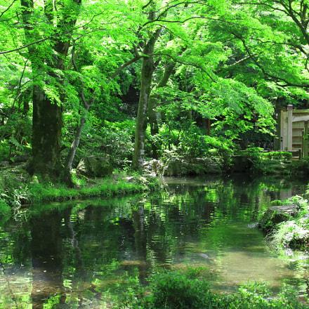 Gifu Park 1, Canon EOS KISS X9
