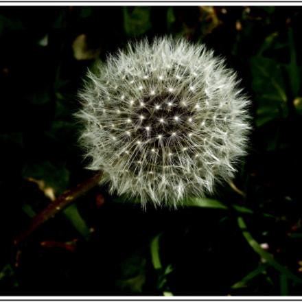 Graines de pissenlit , Nikon COOLPIX S3700