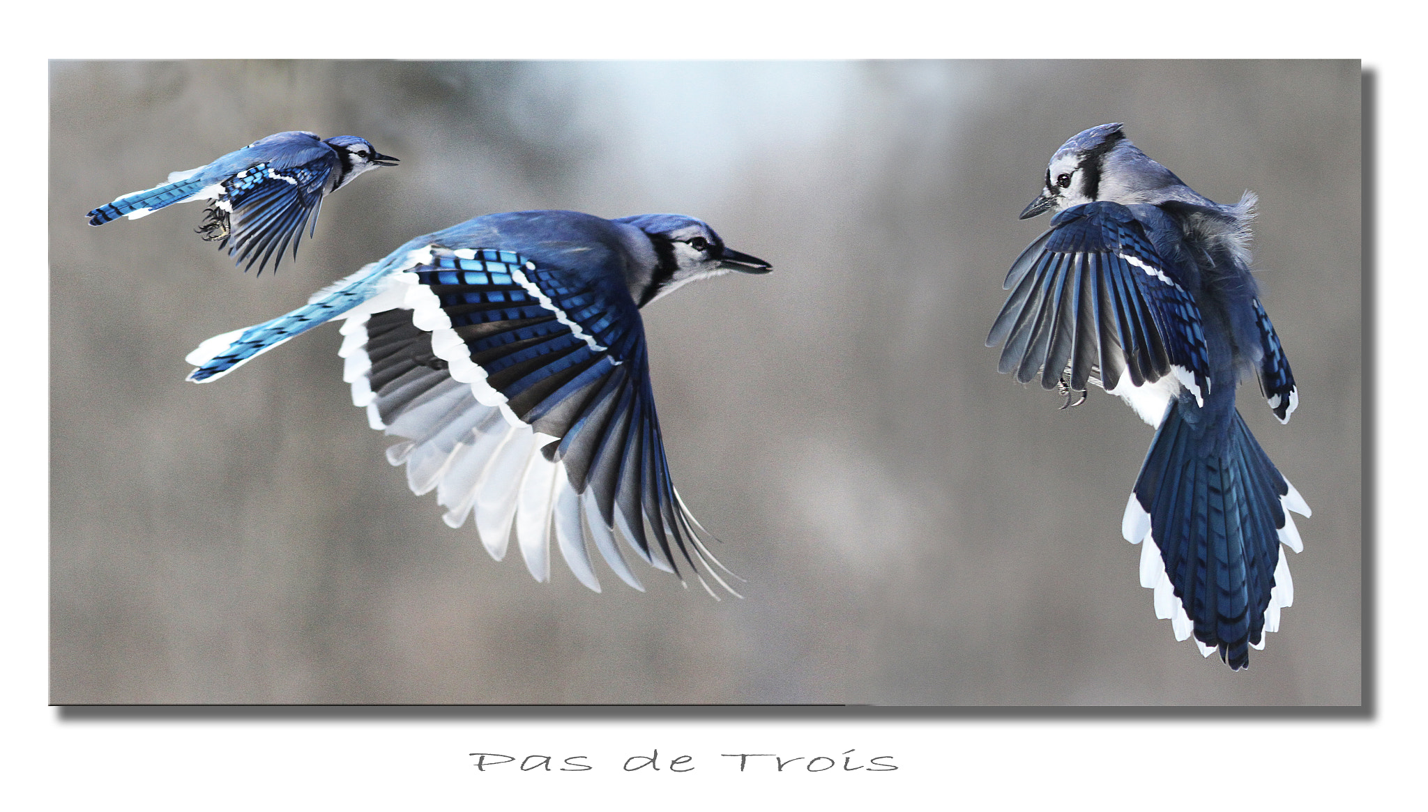 Photograph Pas de Trois by Heather Bashow on 500px