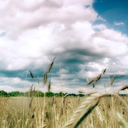 grains under sky, Canon POWERSHOT A700