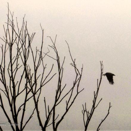 Crow , Panasonic DMC-FZ62