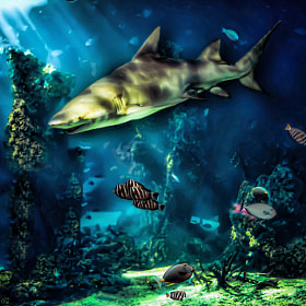 Underwater World by KAphotography  (KAphotographyAU)) on 500px.com