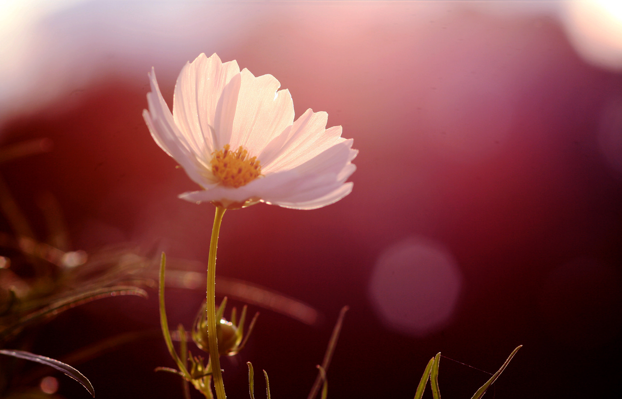 Photograph Cosmos by _ 6151 on 500px