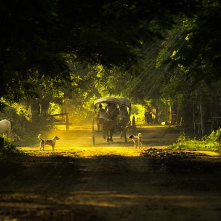 countryside, Nikon D4, AF-S Nikkor 70-200mm f/2.8G ED VR II