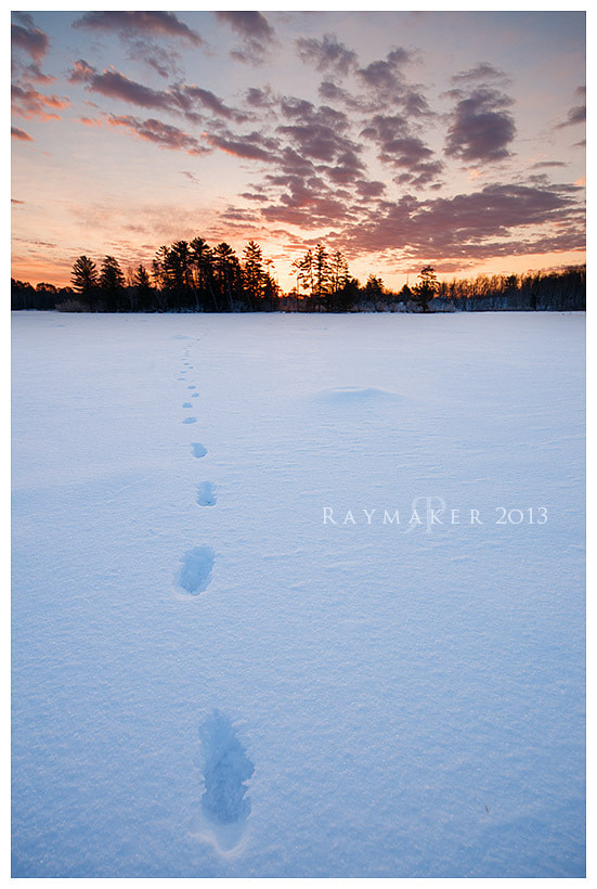Photograph Winter Wolf Tracks by Paul Raymaker on 500px