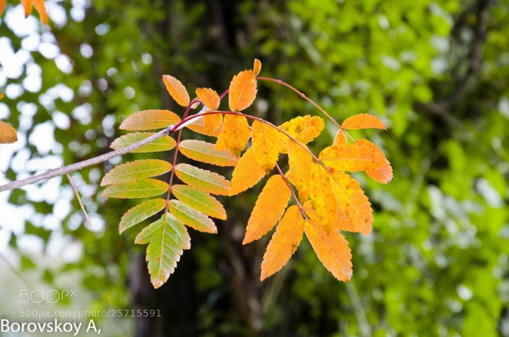 Photograph autumn leaf by Alex 3D on 500px