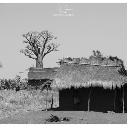 Madagascar N°14, Canon POWERSHOT PRO1