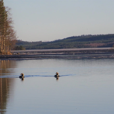 Arctic Loons, RICOH PENTAX K-1, smc PENTAX-F 80-200mm F4.7-5.6