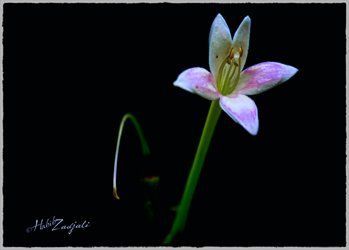 Photograph Life is too Short by Habib Zadjali on 500px