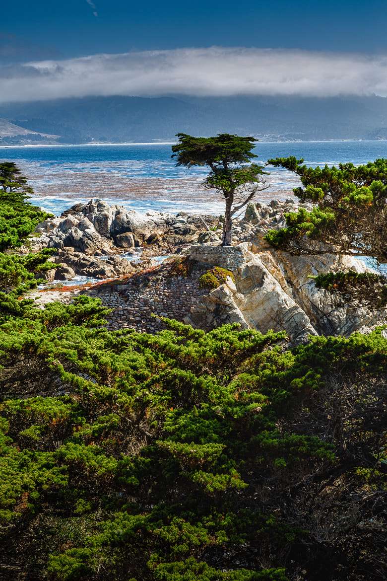 Photograph Lone Cypress by Dave Gaylord on 500px