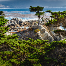 Lone Cypress by Dave Gaylord (DaveGaylord)) on 500px.com